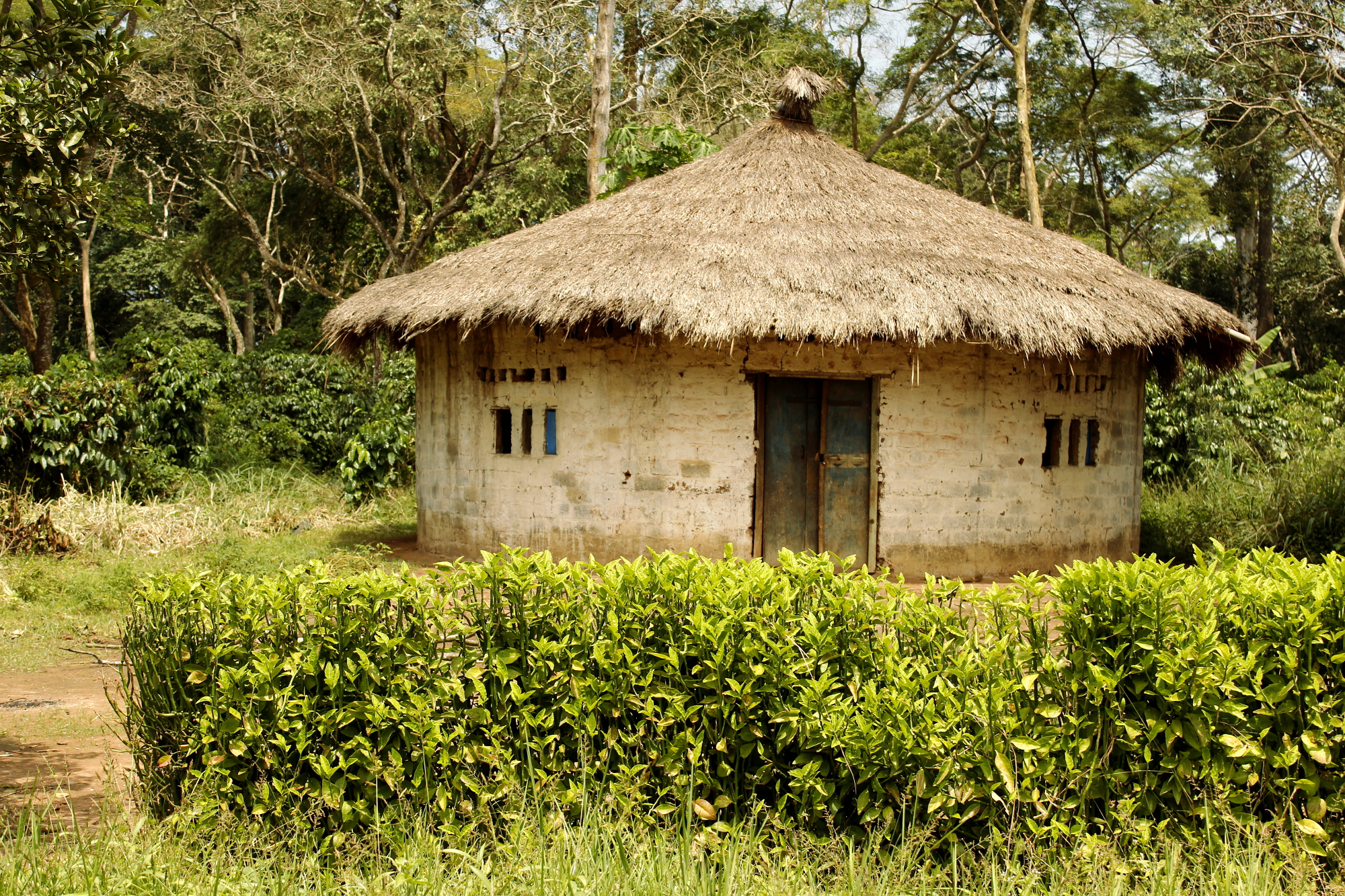 Round houses for African home designs