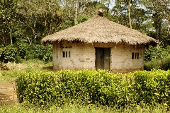 central african repub (nr grimari)